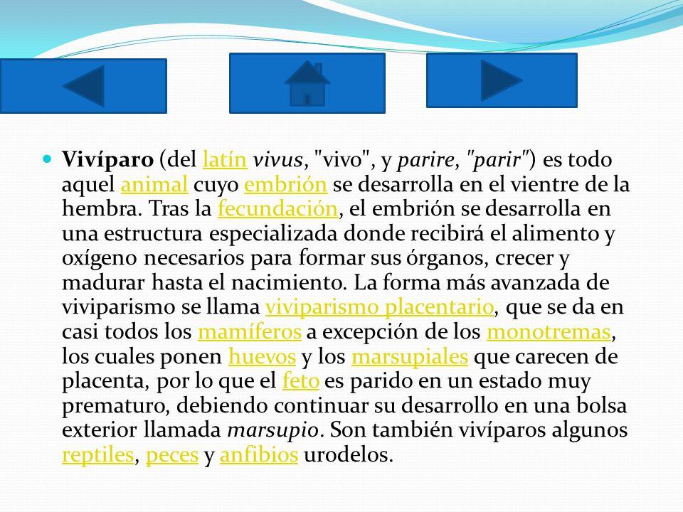 Vivíparo (del latín vivus, vivo , y parire, parir ) es todo aquel animal cuyo embrión se desarrolla en el vientre de la hembra.