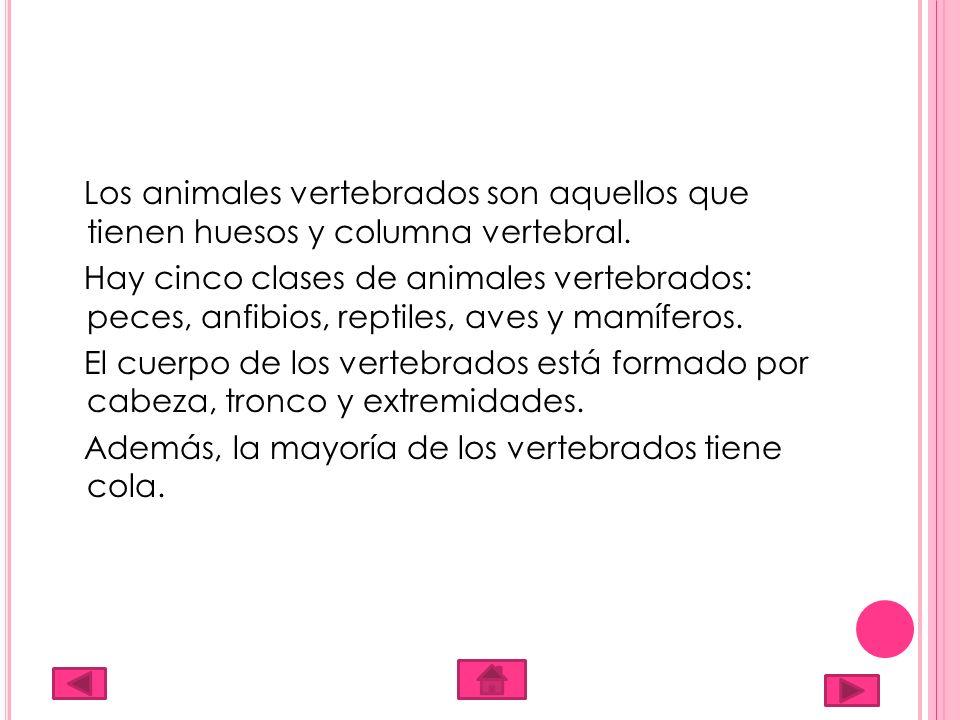 Los animales vertebrados son aquellos que tienen huesos y columna vertebral.