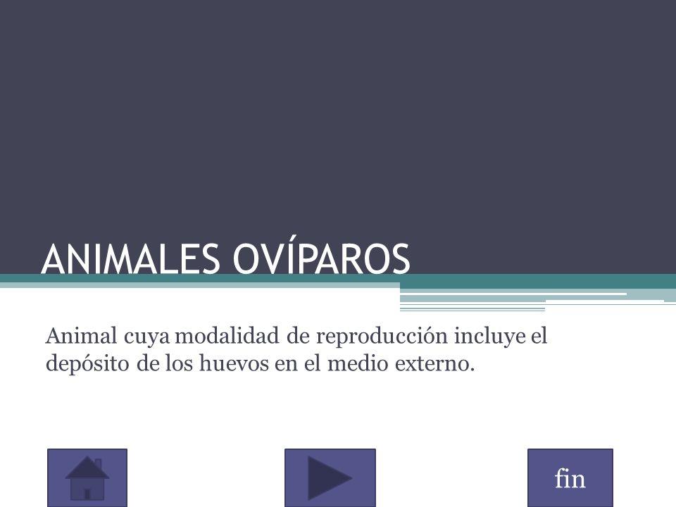 ANIMALES OVÍPAROS Animal cuya modalidad de reproducción incluye el depósito de los huevos en el medio externo.