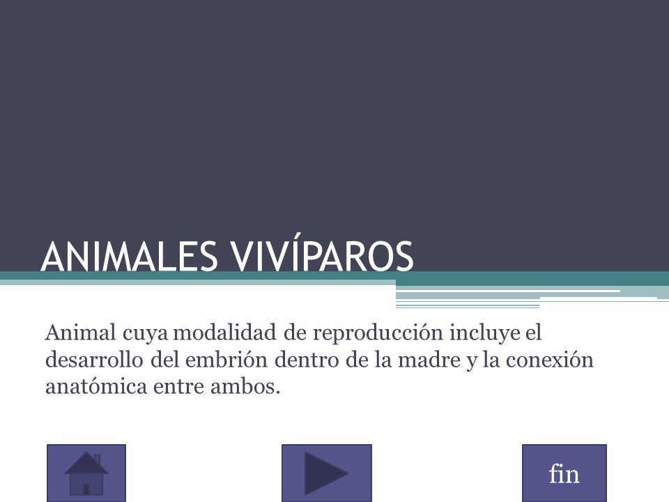 ANIMALES VIVÍPAROS Animal cuya modalidad de reproducción incluye el desarrollo del embrión dentro de la madre y la conexión anatómica entre ambos.