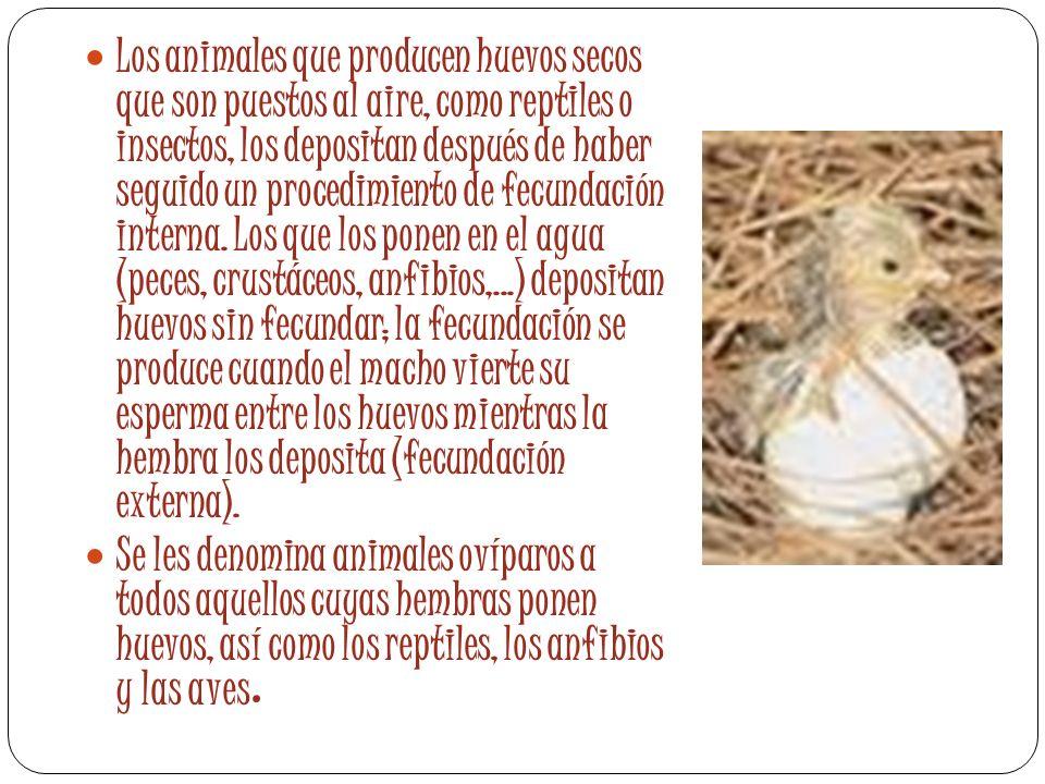 Los animales que producen huevos secos que son puestos al aire, como reptiles o insectos, los depositan después de haber seguido un procedimiento de fecundación interna. Los que los ponen en el agua (peces, crustáceos, anfibios,...) depositan huevos sin fecundar; la fecundación se produce cuando el macho vierte su esperma entre los huevos mientras la hembra los deposita (fecundación externa).