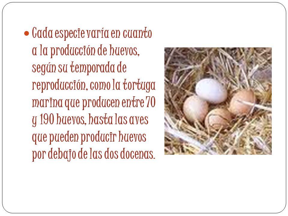 Cada especie varía en cuanto a la producción de huevos, según su temporada de reproducción, como la tortuga marina que producen entre 70 y 190 huevos, hasta las aves que pueden producir huevos por debajo de las dos docenas.