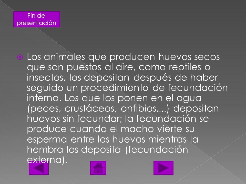 Los animales que producen huevos secos que son puestos al aire, como reptiles o insectos, los depositan después de haber seguido un procedimiento de fecundación interna.