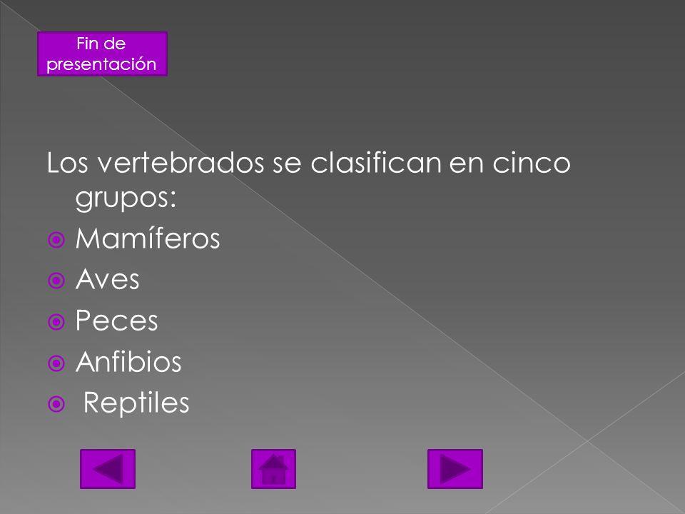Los vertebrados se clasifican en cinco grupos: