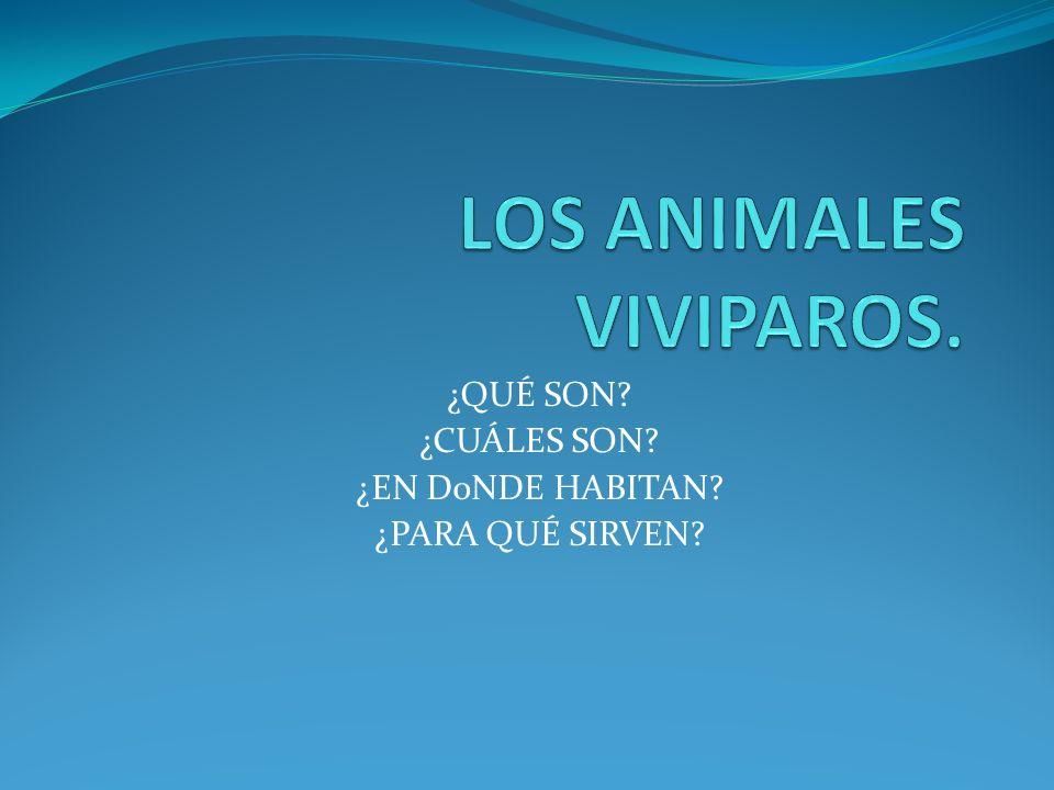 LOS ANIMALES VIVIPAROS.