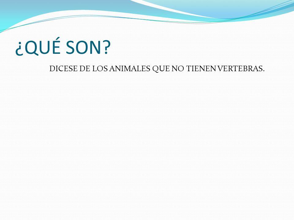 ¿QUÉ SON DICESE DE LOS ANIMALES QUE NO TIENEN VERTEBRAS.