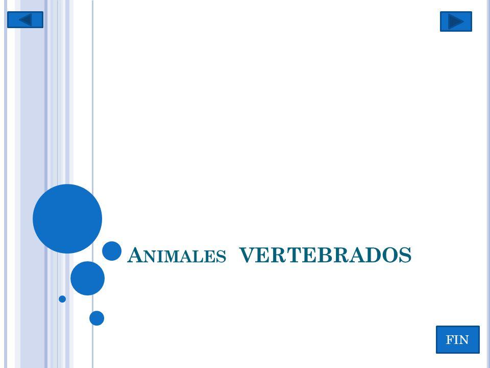 Animales VERTEBRADOS FIN