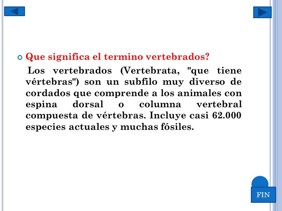 Vertebrados…. Que significa el termino vertebrados