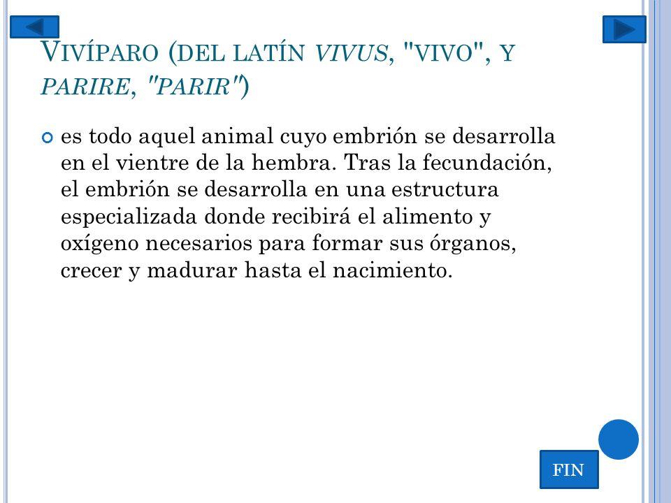 Vivíparo (del latín vivus, vivo , y parire, parir )