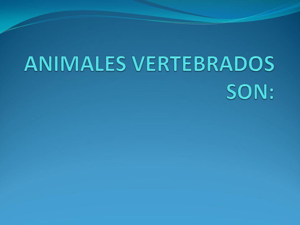 ANIMALES VERTEBRADOS SON: