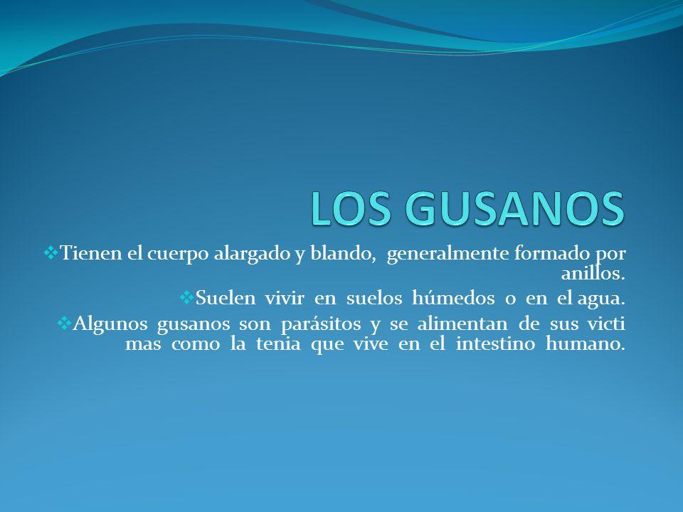 LOS GUSANOS Tienen el cuerpo alargado y blando, generalmente formado por anillos. Suelen vivir en suelos húmedos o en el agua.