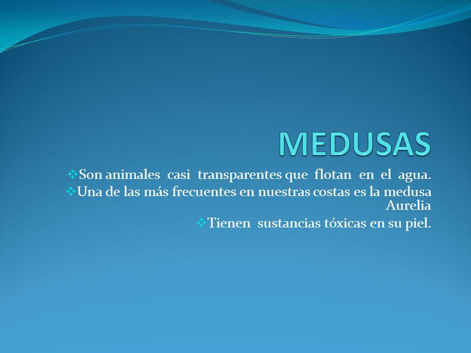 MEDUSAS Son animales casi transparentes que flotan en el agua.