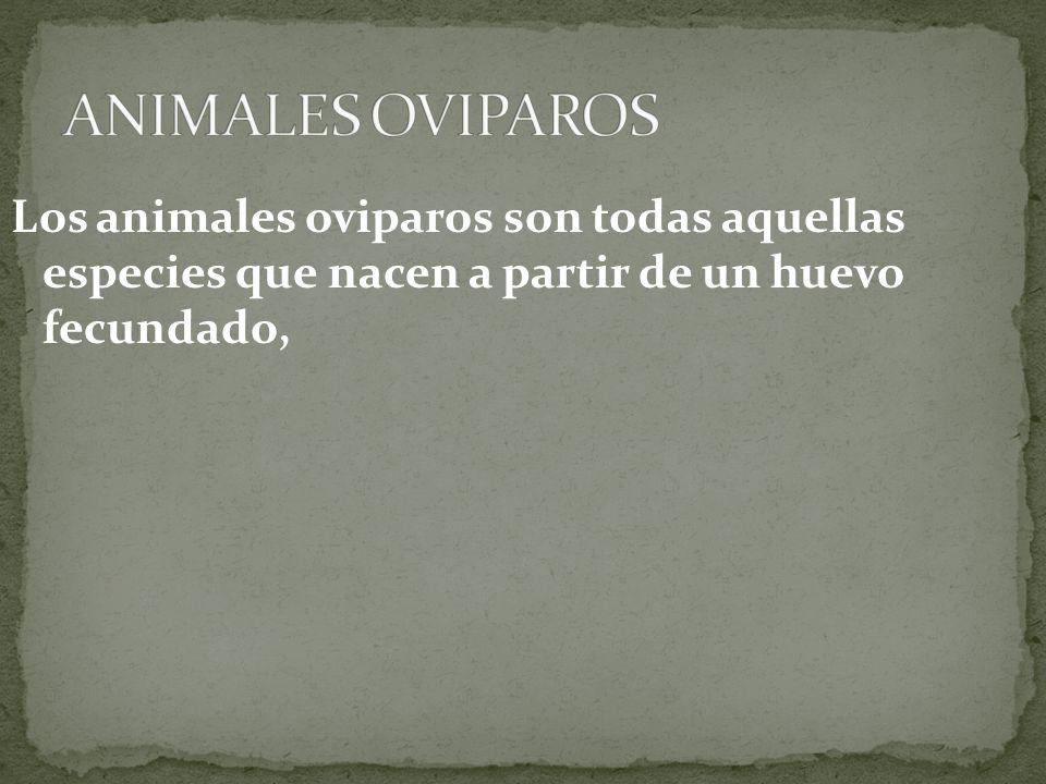 ANIMALES OVIPAROS Los animales oviparos son todas aquellas especies que nacen a partir de un huevo fecundado,