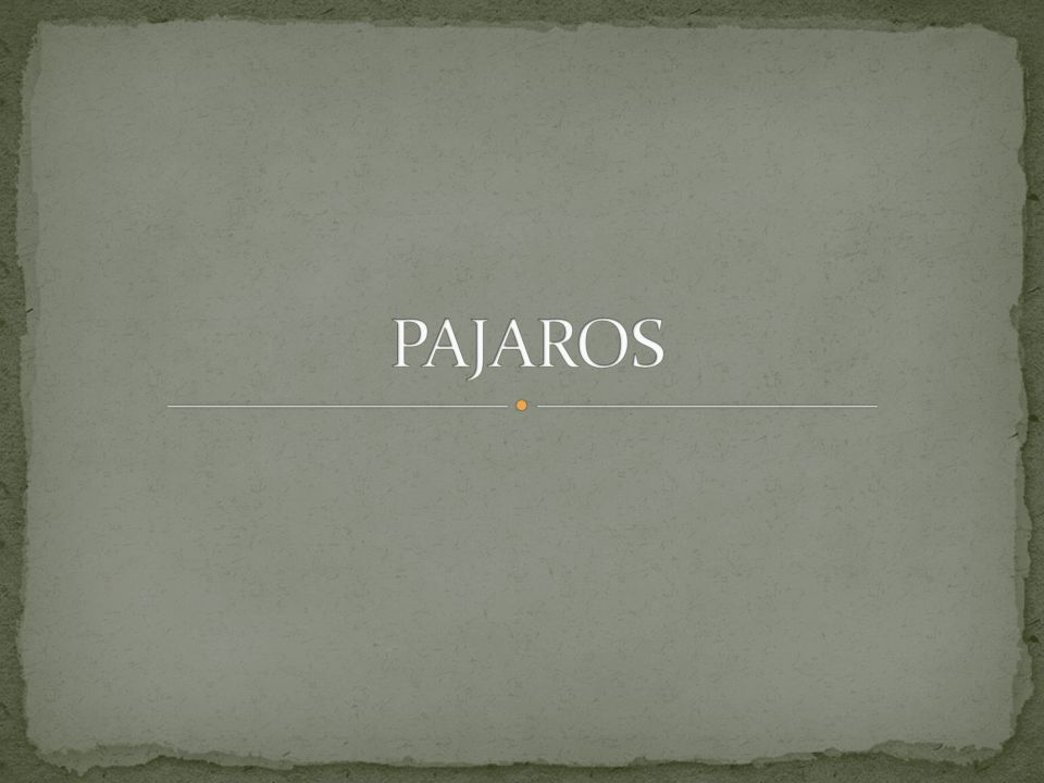 PAJAROS