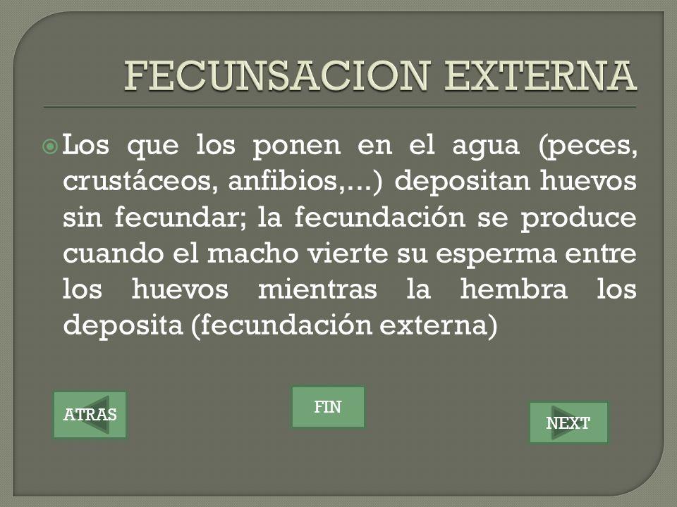 FECUNSACION EXTERNA