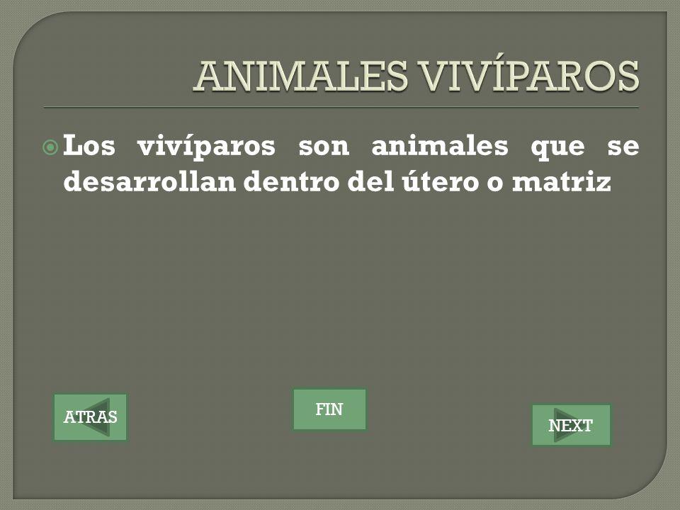 ANIMALES VIVÍPAROS Los vivíparos son animales que se desarrollan dentro del útero o matriz