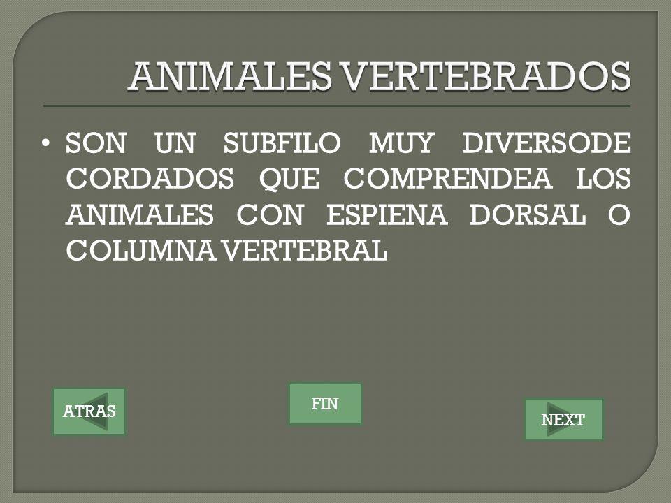 ANIMALES VERTEBRADOS SON UN SUBFILO MUY DIVERSODE CORDADOS QUE COMPRENDEA LOS ANIMALES CON ESPIENA DORSAL O COLUMNA VERTEBRAL.