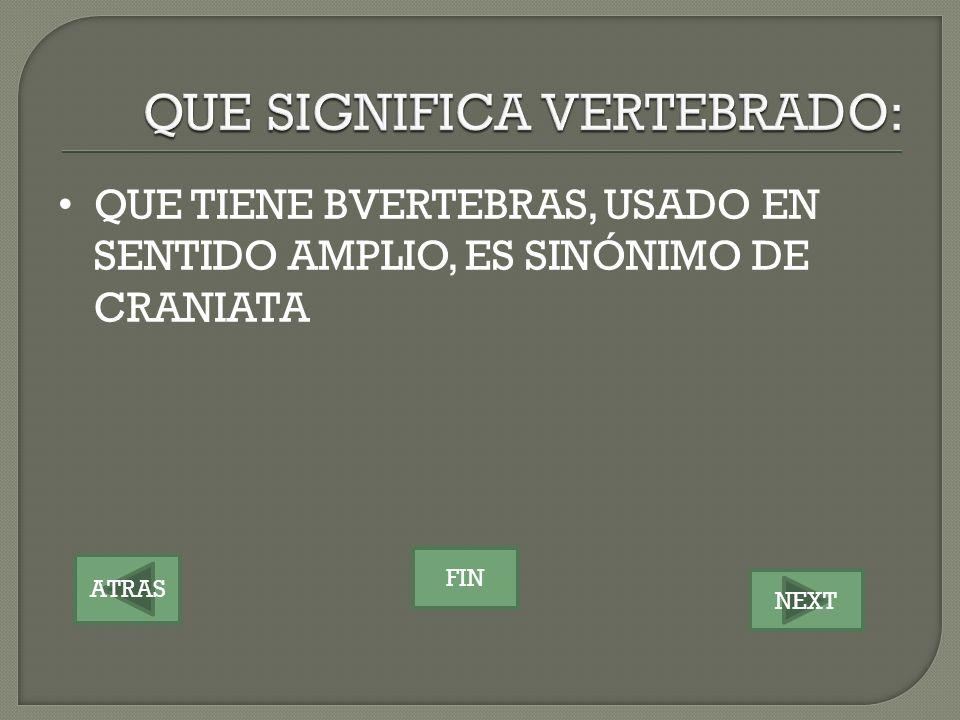 QUE SIGNIFICA VERTEBRADO: