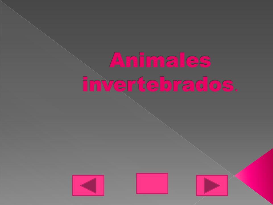 Animales invertebrados.