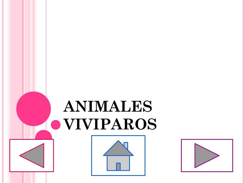 ANIMALES VIVIPAROS