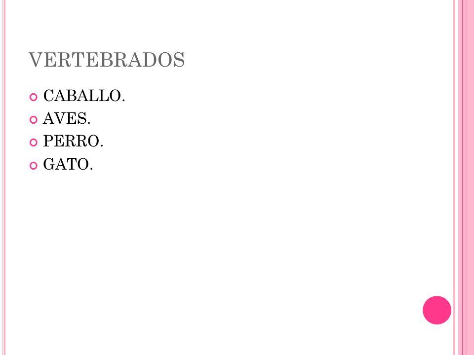 VERTEBRADOS CABALLO. AVES. PERRO. GATO.