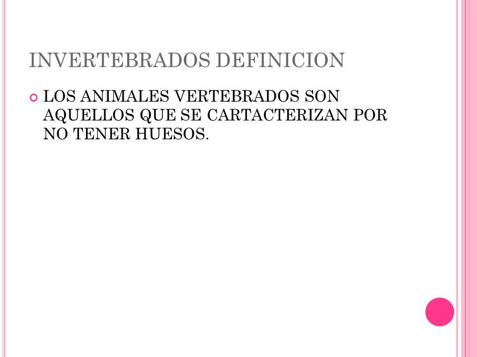 INVERTEBRADOS DEFINICION