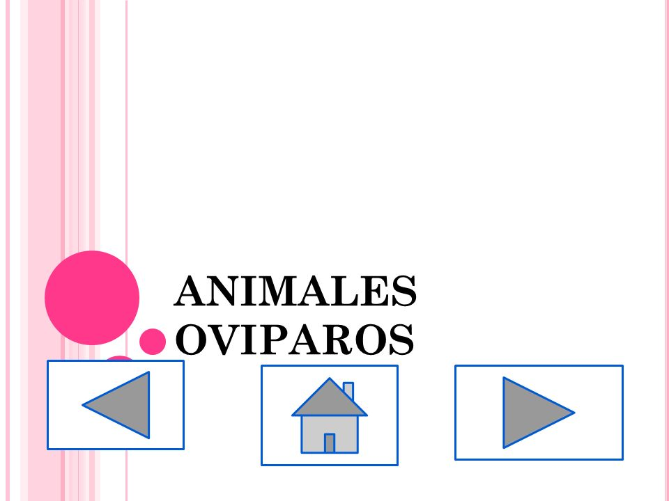 ANIMALES OVIPAROS