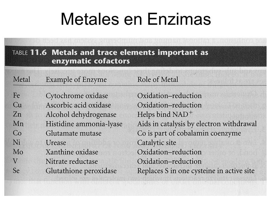 Metales en Enzimas