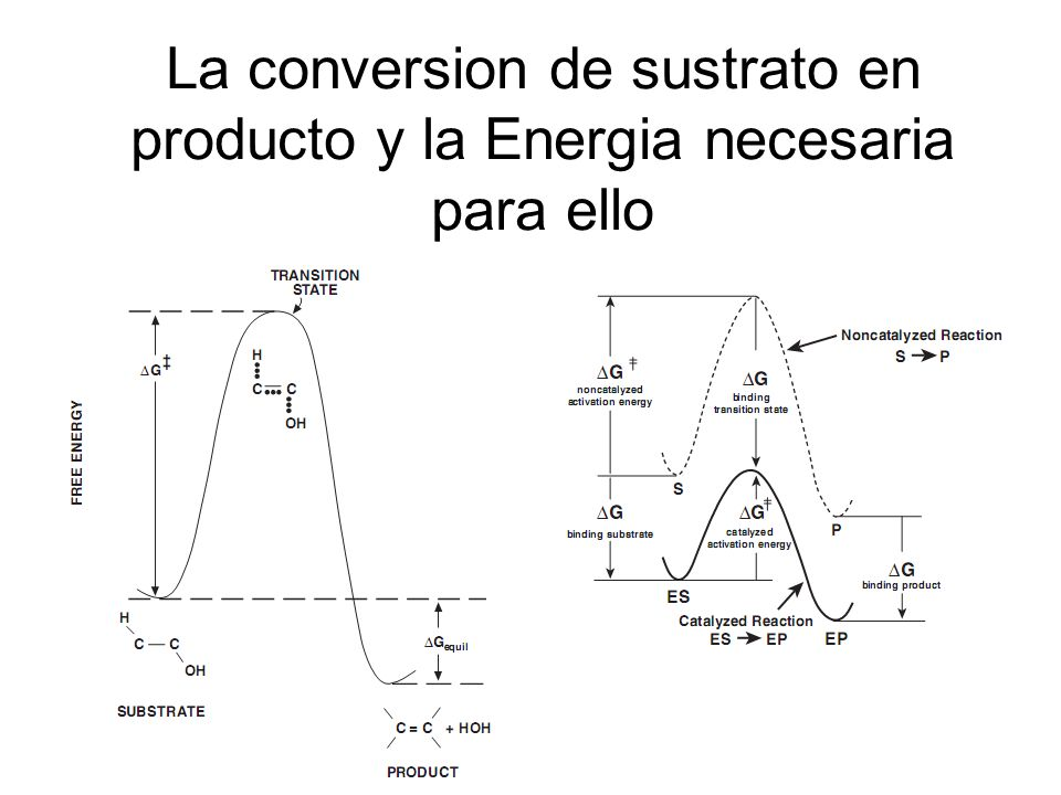 La conversion de sustrato en producto y la Energia necesaria para ello
