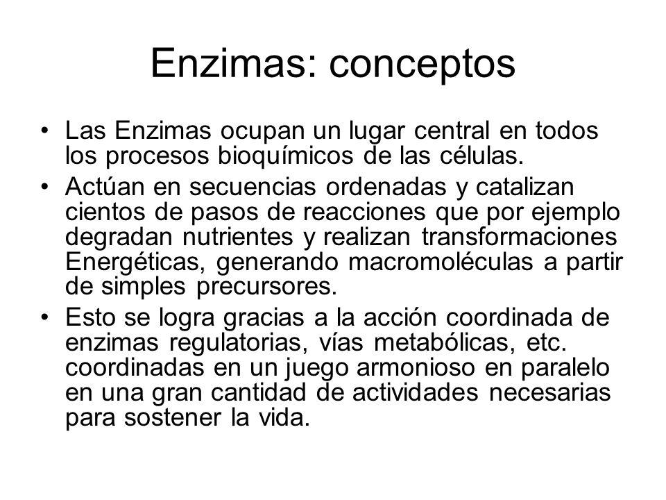 Enzimas: conceptos Las Enzimas ocupan un lugar central en todos los procesos bioquímicos de las células.