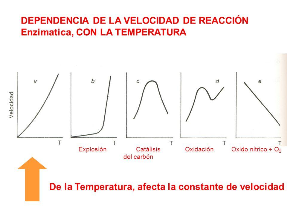 DEPENDENCIA DE LA VELOCIDAD DE REACCIÓN Enzimatica, CON LA TEMPERATURA