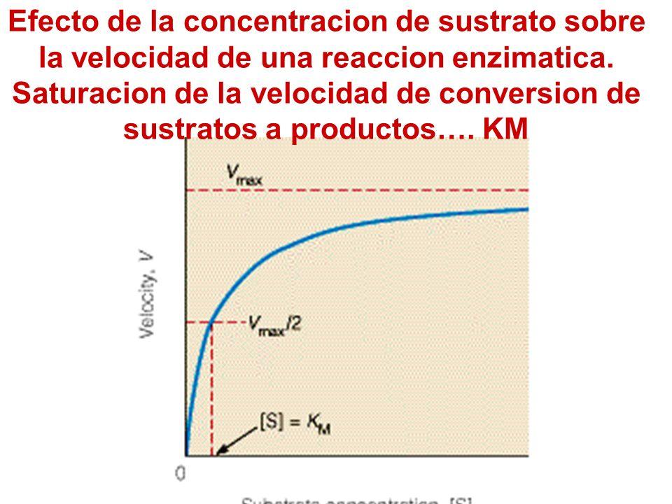Efecto de la concentracion de sustrato sobre la velocidad de una reaccion enzimatica.