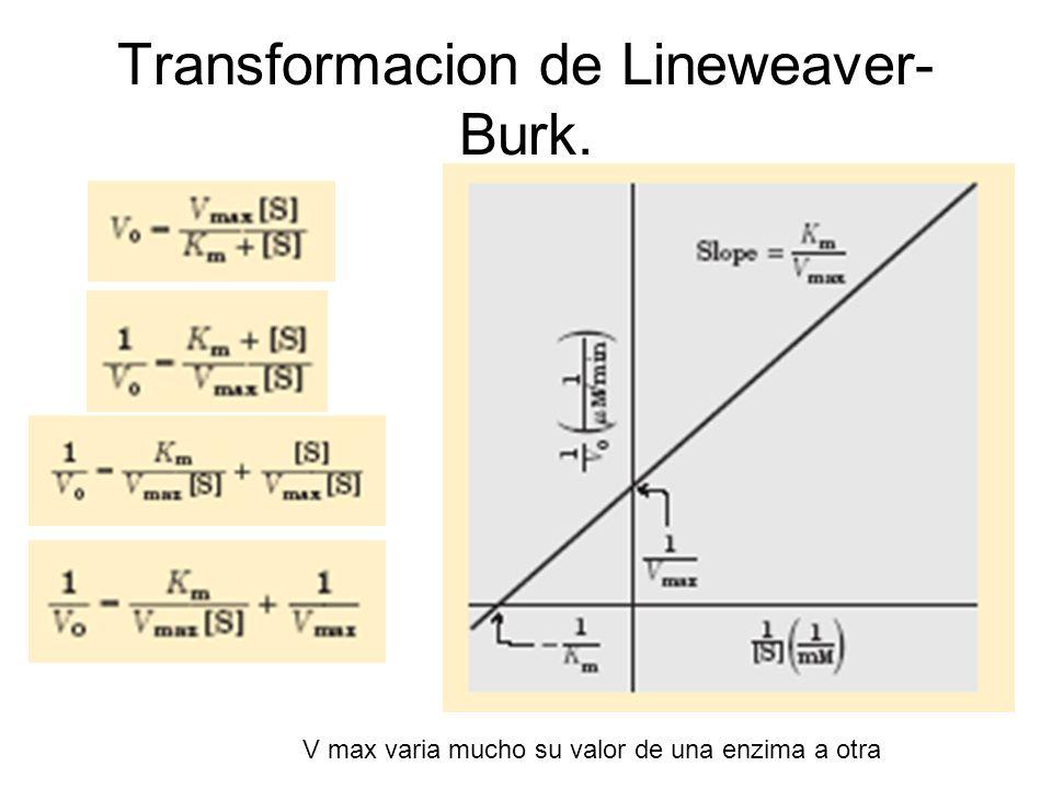 Transformacion de Lineweaver-Burk.