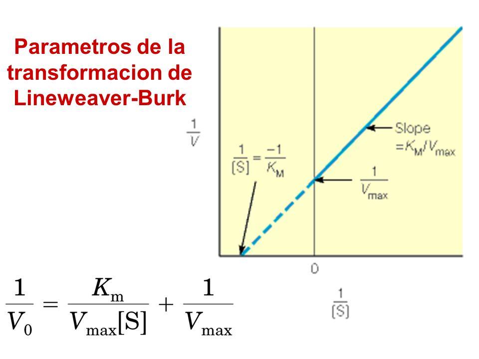 Parametros de la transformacion de Lineweaver-Burk
