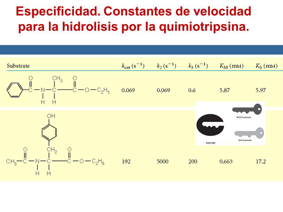 Especificidad. Constantes de velocidad para la hidrolisis por la quimiotripsina.