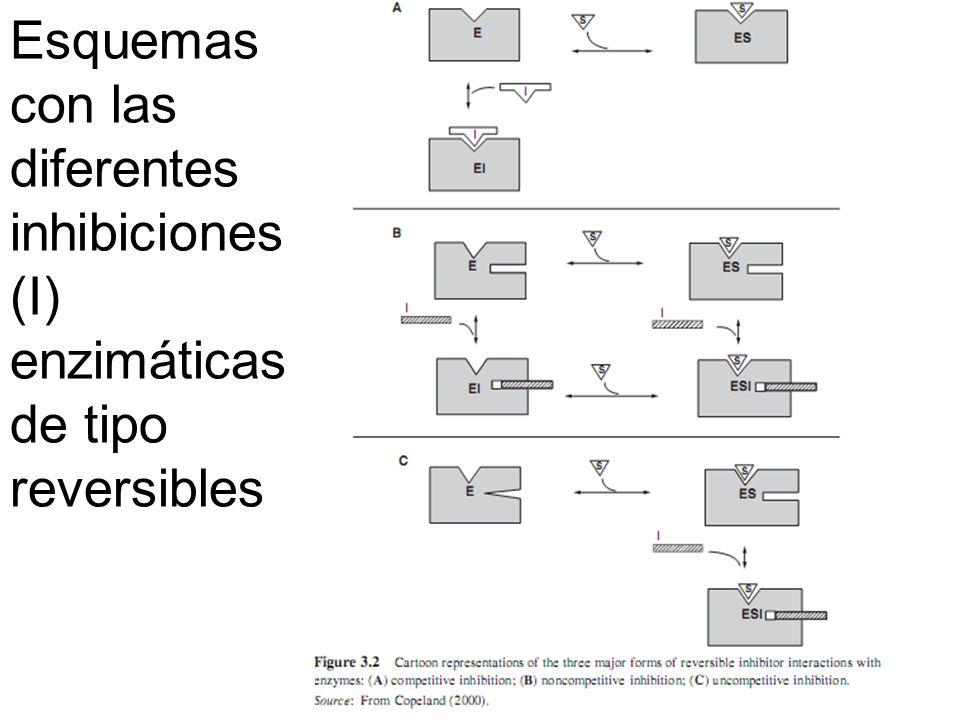 Esquemas con las diferentes inhibiciones (I) enzimáticas de tipo reversibles