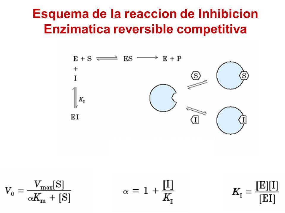 Esquema de la reaccion de Inhibicion Enzimatica reversible competitiva