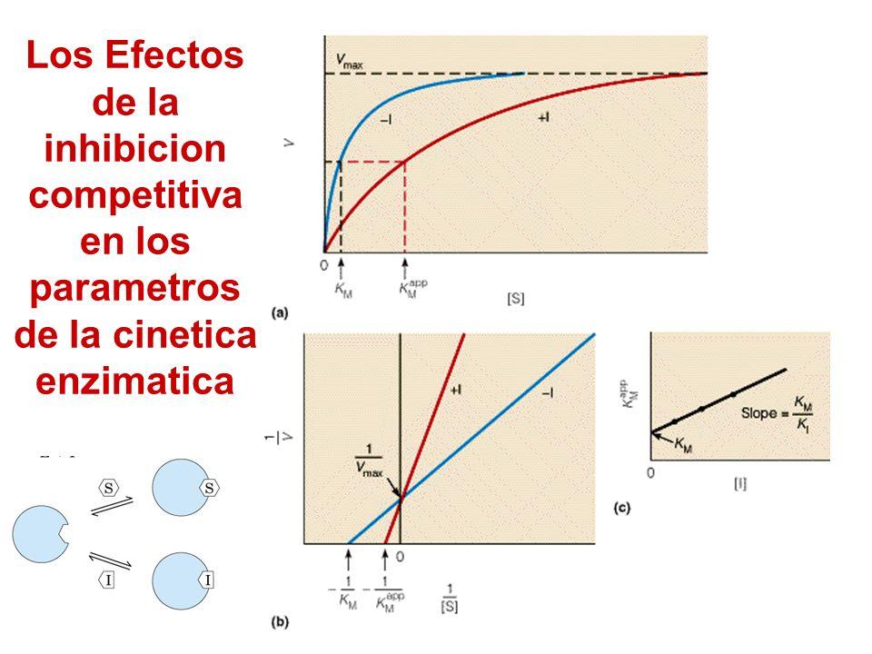 Los Efectos de la inhibicion competitiva en los parametros de la cinetica enzimatica