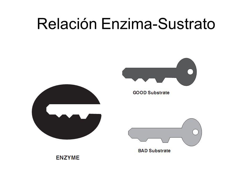 Relación Enzima-Sustrato