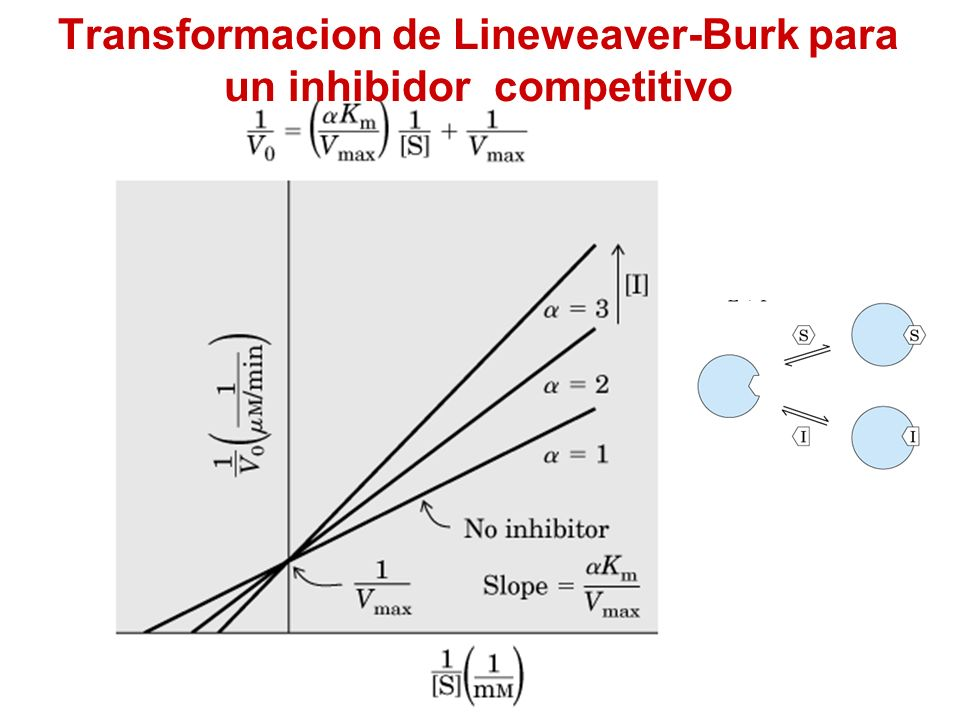 Transformacion de Lineweaver-Burk para un inhibidor competitivo