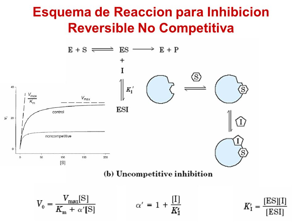 Esquema de Reaccion para Inhibicion Reversible No Competitiva