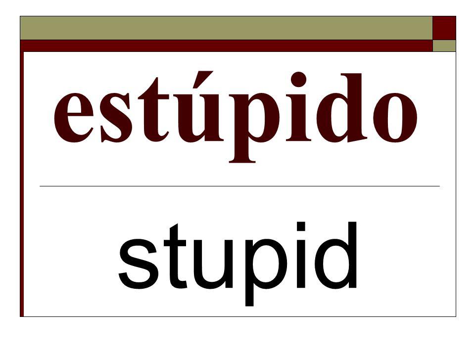 estúpido stupid