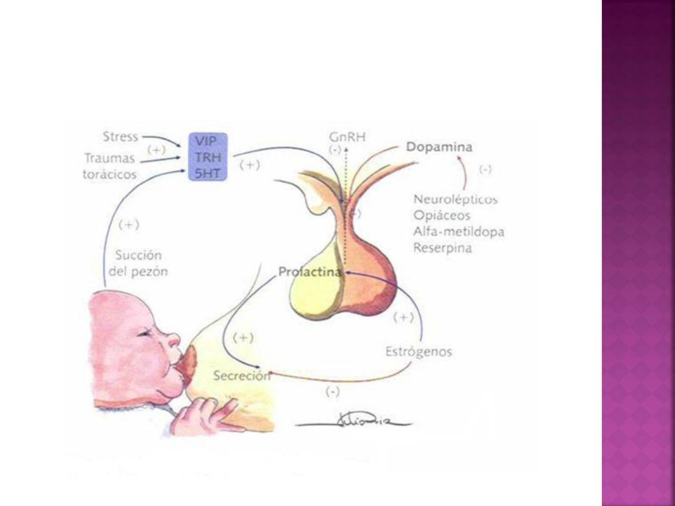 Los estrógenos aumentan la producción de prolactina, sin embargo, la supresión de los estrógenos (ej: suspender anticonceptivos orales) también pueden desencadenar una galactorrea.