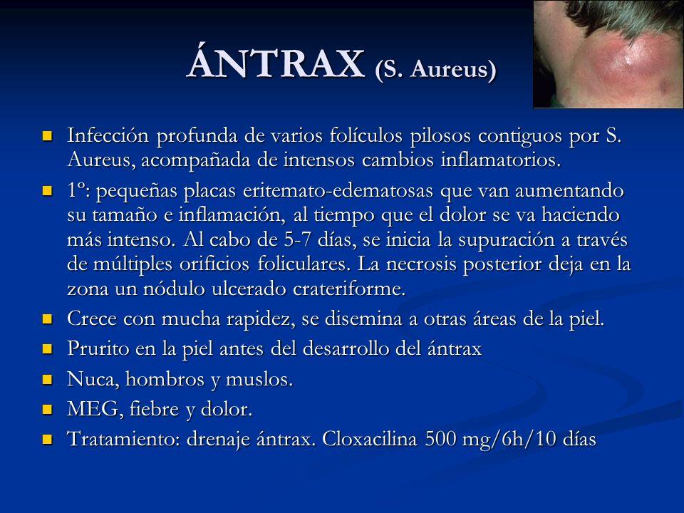 ÁNTRAX (S. Aureus) Infección profunda de varios folículos pilosos contiguos por S. Aureus, acompañada de intensos cambios inflamatorios.