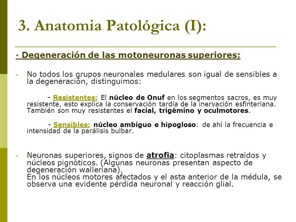 3. Anatomia Patológica (I):