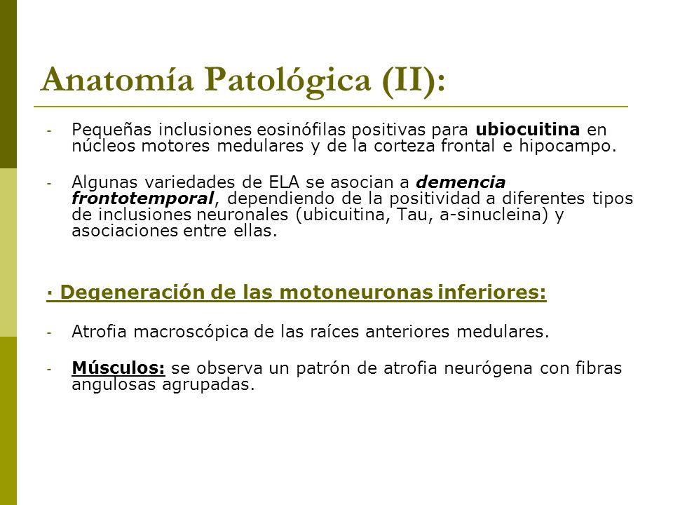 Anatomía Patológica (II):