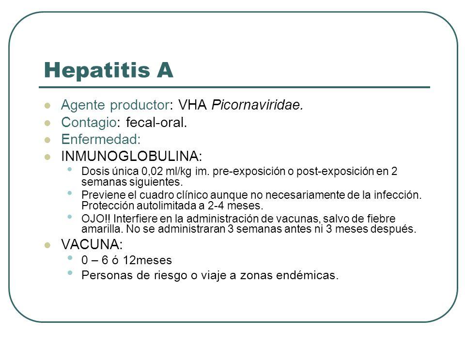 Hepatitis A Agente productor: VHA Picornaviridae.