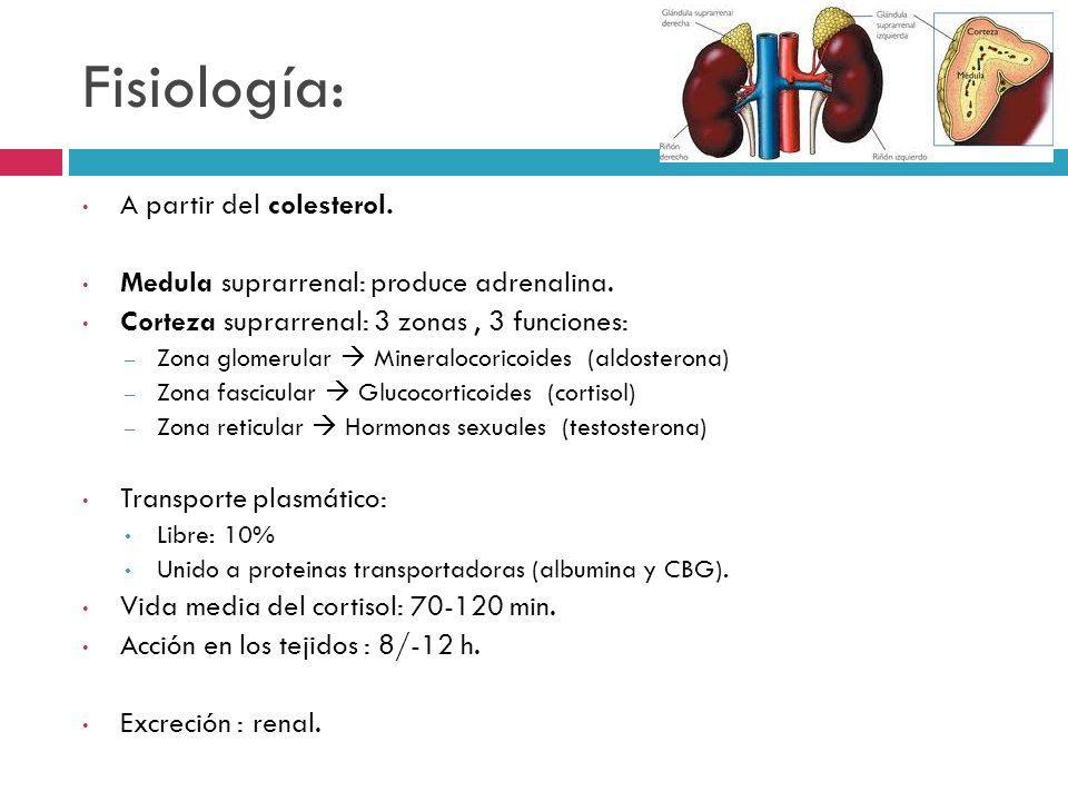 Fisiología: A partir del colesterol.