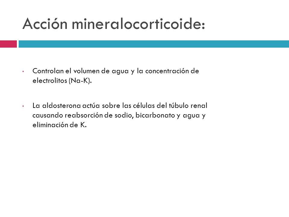 Acción mineralocorticoide:
