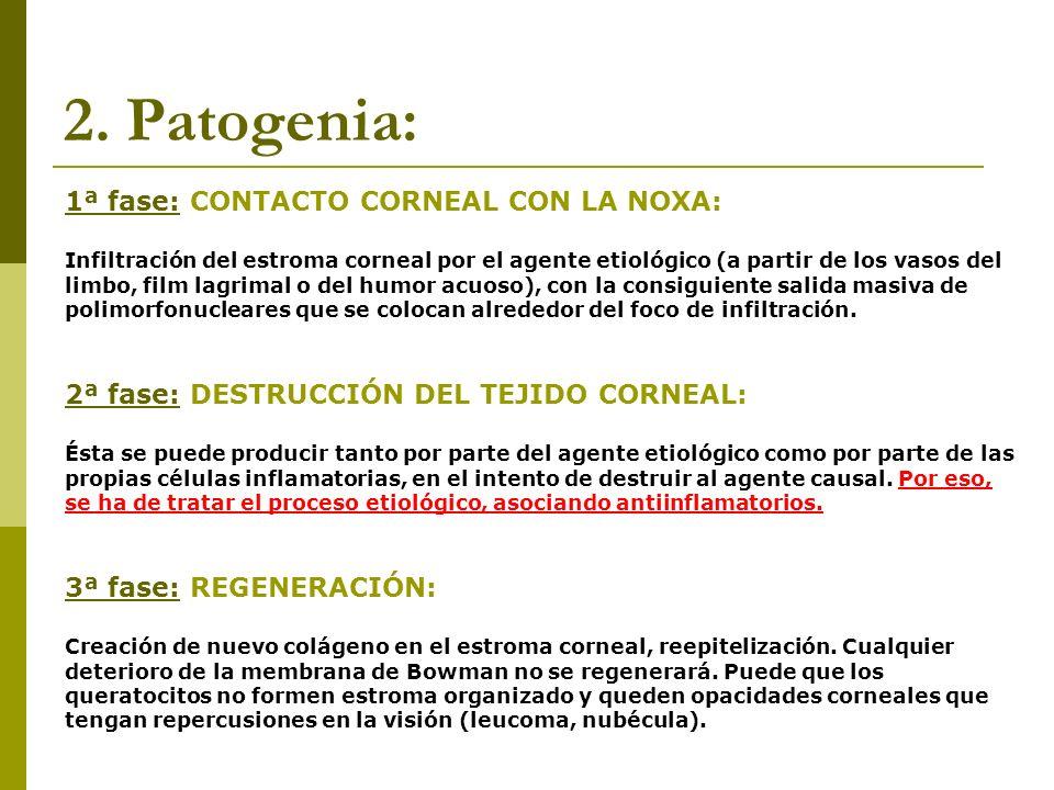 2. Patogenia: